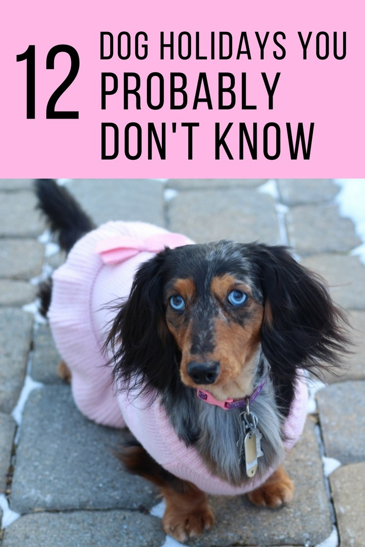 12-Dog-Holidays-You-Probably-Don't-Know