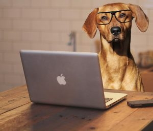 dog-laptop-work